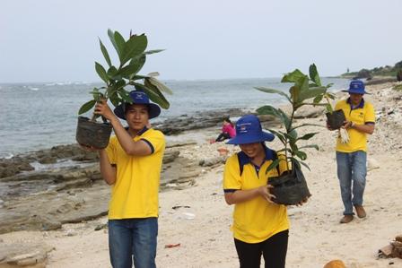 Trồng 100 cây bàng xung quanh bờ biển