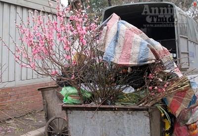 Thùng đựng rác đầy ứ hoa đào sau tết nguyên đán