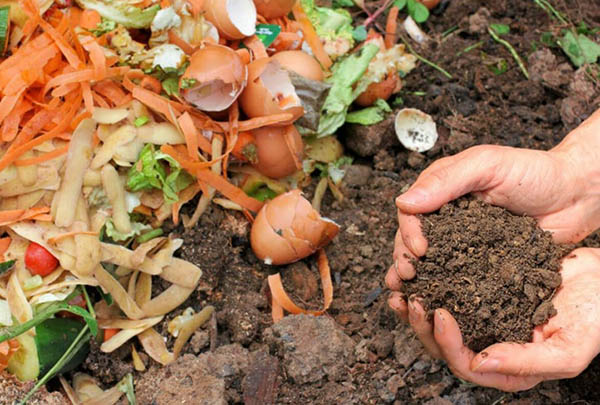 Hướng dẫn ủ phân bằng thùng rác hữu cơ